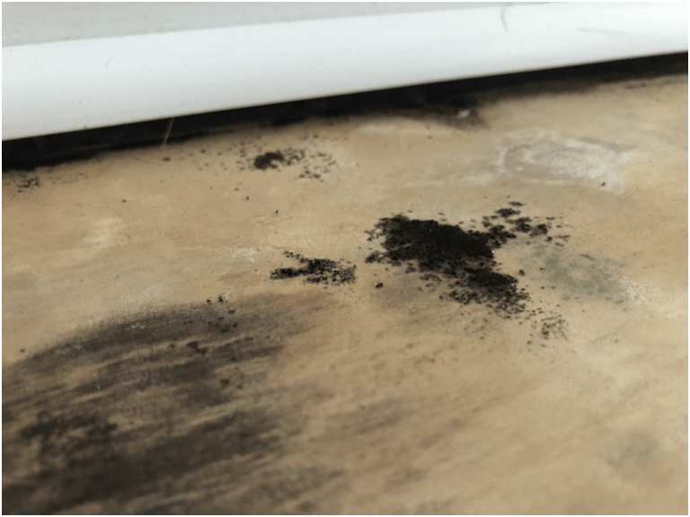 How to Know If Your Home Has a Mold Issue?