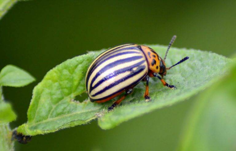 Things to Know About Integrated Pest Management